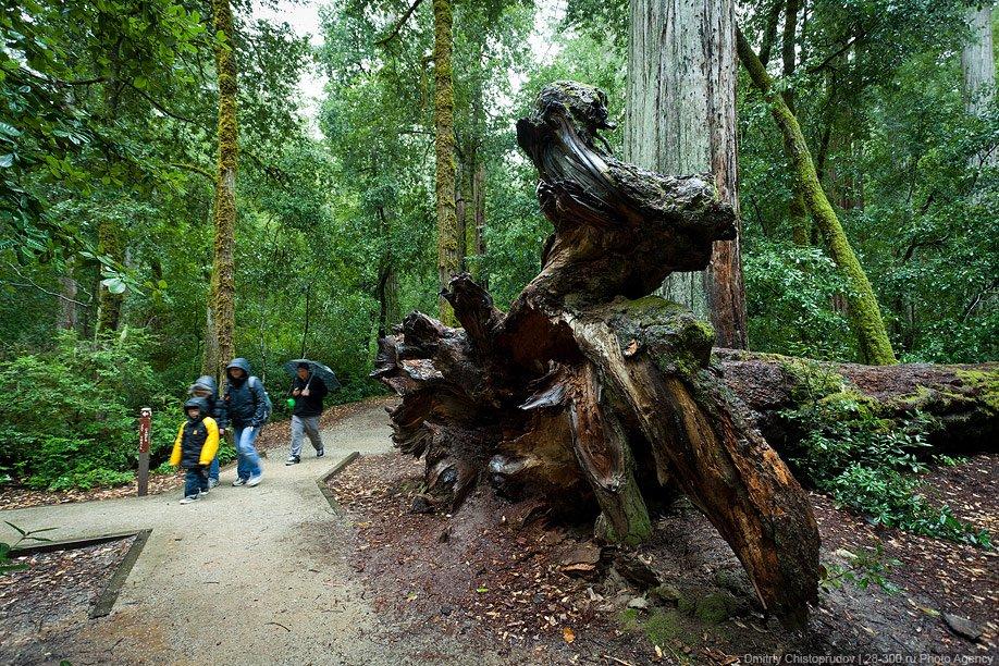Национальный парк Редвуд в Калифорнии