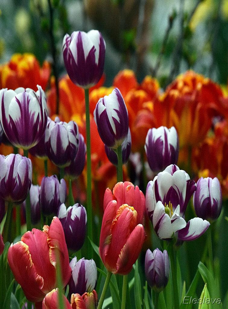 Бурное цветение