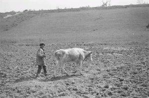 Мальчик с коровой